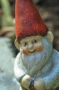 garden-gnome-193377__180